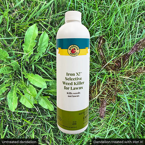 iron x weed killer review