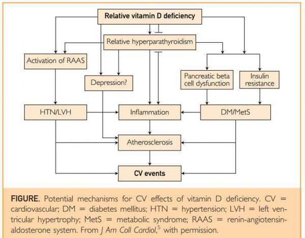 vitamin d and hypertension an update and review