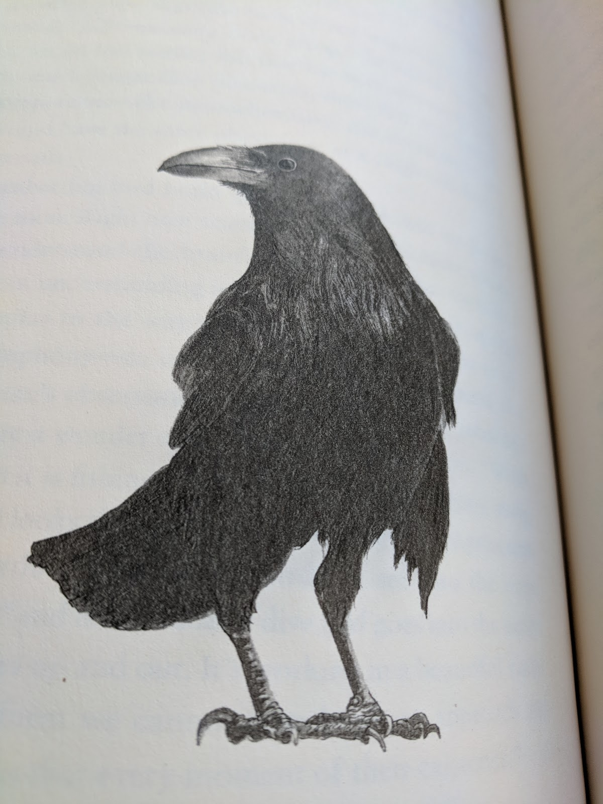 the wonder of birds review